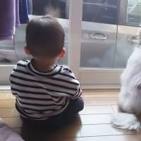 りくと幸太郎と子供の写真は可愛いがそれだけではない事もある。