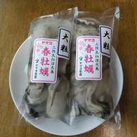 気仙沼の牡蠣