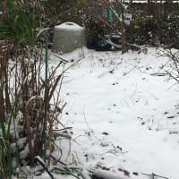 福岡県でも、雪が積もります。