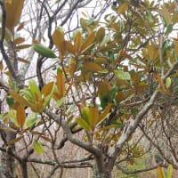 神戸市立森林植物園 2月20日