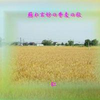 『 蘇れ玄妙の季麦の秋 』TAO交心zqt0406