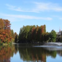 晩秋の別所沼公園