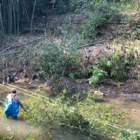 歩々清風・・・・七曲川岸辺の竹等の伐採