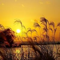 ススキと夕陽のスズメ島
