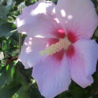 昼の動き&街の花