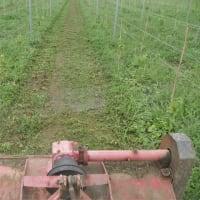 ハンマーナイフモアで除草作業。