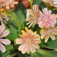 初夏の小花たち・・・アルプカとか‼