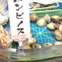 当店の海鮮浜焼きで一番人気の貝!!漁師の浜焼 あぶりや ららぽーと湘南平塚店