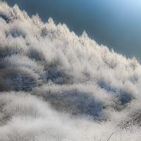 霧氷に魅せられて