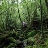 期間限定のお知らせ「鹿児島県内の方はなんとツアー料金半額!この機会に屋久島はいかが?」