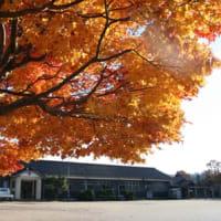 山のがっこうの秋