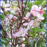 早春の花飾り