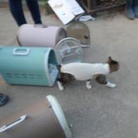 飼い主のいない猫さんメス3匹避妊手術