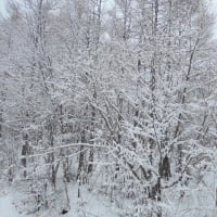2月26日(水)の冬龍門