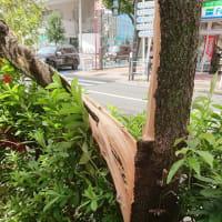 台風15号の状況報告