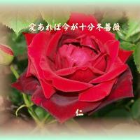 『 言葉しか遊ぶものなし老の春 』TAO575交心yty0501