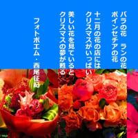 十二月の花の店