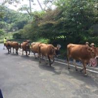 ぐんまの旅、神津牧場