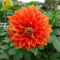 11月6日(水)は切り花販売を開催します。