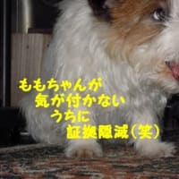 オチャのボヤキ…(横取り編)