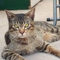 7月14日、日曜日「猫の譲渡会」を千舟町ねこちゃるさんにて開催します!!