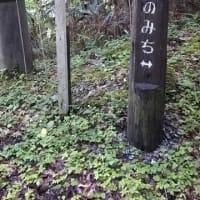 ホーリー釣行記(437)
