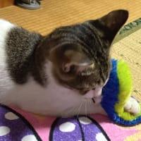 子猫vsニョロニョロさん