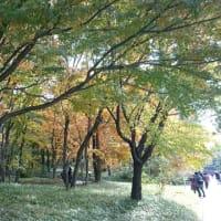 東京散歩 ①
