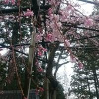 【4月20日開催】ユタ(沖縄の霊能師)hirakawa氏とのコラボ鑑定