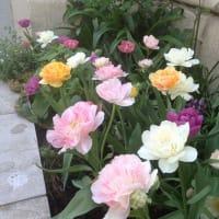 『花壇の花たち・1』
