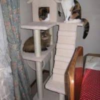 猫タワー新調。