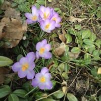 春まついぶき
