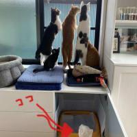 エキサイティングな猫たち