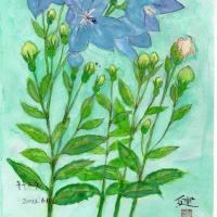 キキョウの花が4輪揃ったところで描きました(スケッチ&コメント)