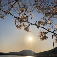 さくらバンス筍〜スーパームーン満月