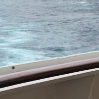 豪華客船スプレンディダ号で出合った昆虫