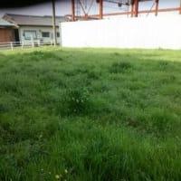 空き地の草むら考