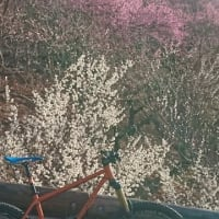 e-Bikeばっかりに乗っていたら、ペダルバイクの登りが速くなった件