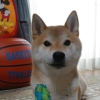 フープちゃん。お誕生日だね。
