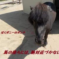 馬の後ろには、絶対に近寄らないでね!!