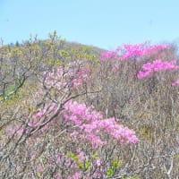 アケボノ咲く西赤石山5