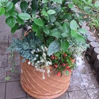 11/3 エリア4:花壇の植替え作業