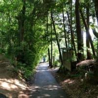 狭山湖周辺を歩く:トトロの森でばけたんが…