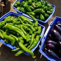 夏野菜最盛期!