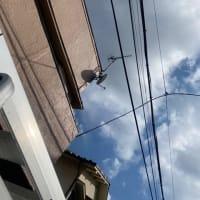 最近亀戸付近で電波障害が増えている