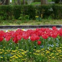 公園の花々