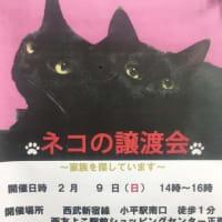 2月のネコちゃんの譲渡会🐈🐈