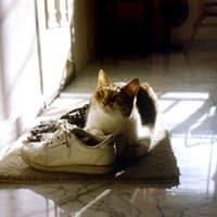 猫と日だまり