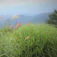 夏ゆく風、園原古道