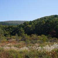 秋の八幡高原